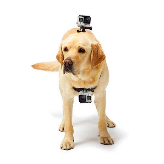 Крепление на собаку для экшн камер AC Prof